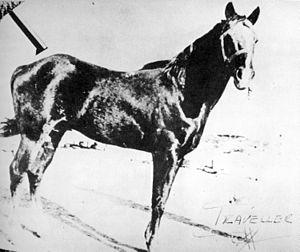 Traveler (horse) - Traveler