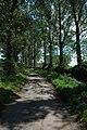 Tree lined road, Ashleworth - geograph.org.uk - 931586.jpg