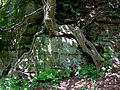 Tree rooted in rock face, Chesterton, Shropshire - geograph.org.uk - 1305268.jpg
