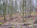 Trees, Washers Pit Coppice - geograph.org.uk - 1172378.jpg
