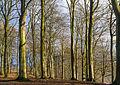 Trees along Hald Sø Denmark.jpg