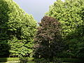 Trees in the grounds of Fetter Lane Moravian Church, London SW10.jpg