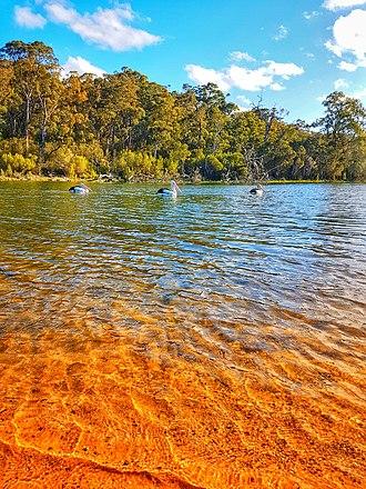 Gippsland Lakes - Trio of pelicans at Lake Tyers, Gippsland Lakes, Victoria, Australia