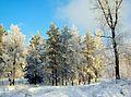 Tsentralnyy rayon, Krasnoyarsk, Krasnoyarskiy kray, Russia - panoramio (28).jpg
