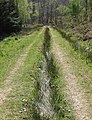 Tussocky grass down a forest road - geograph.org.uk - 1265603.jpg