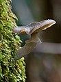 Unidentified Fungi 5974 2.jpg