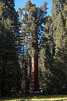 United States - California - Sequoia National Park - 15.jpg