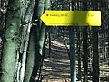 Urgeschichtliche Höhensiedlung und mittelalterliche Burgruine am Wauberg 05.jpg