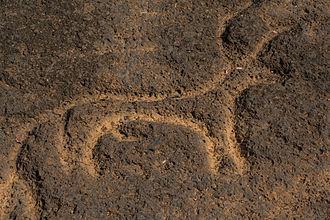 Usgalimal rock engravings - Rock art at Usgalimal