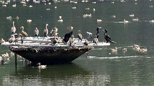 Vadakkechira - Migratory birds in Vadakkechira