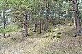Vangfeltet, Vang Burial Site, Norway's largest burial field, iron-Viking age (gravfelt fra jernalderen), Oppdal, Trøndelag. Forest, pine trees, etc. 2019-04-25 387.jpg