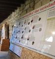 Variedad olfatos de uvas Museo.png