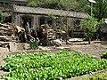 Vegetable garden (5750676734).jpg