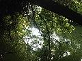 Veleka river BG - IMG 6082.jpg