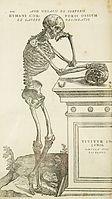 Anatomy/