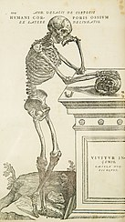 Anatomy - Wikipedia