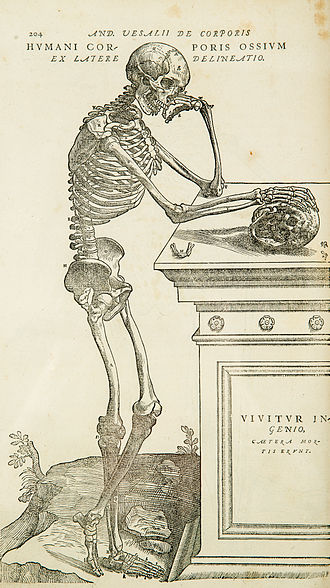 Anatomy - One of the large, detailed illustrations in Andreas Vesalius's De humani corporis fabrica 16th century, marking the rebirth of anatomy