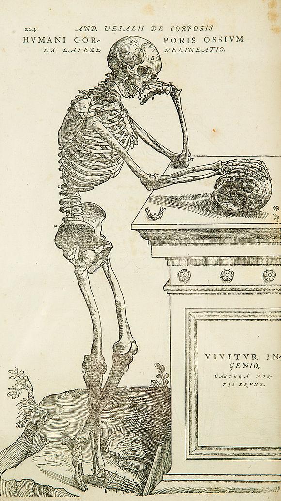 Anatomy - Wikiwand