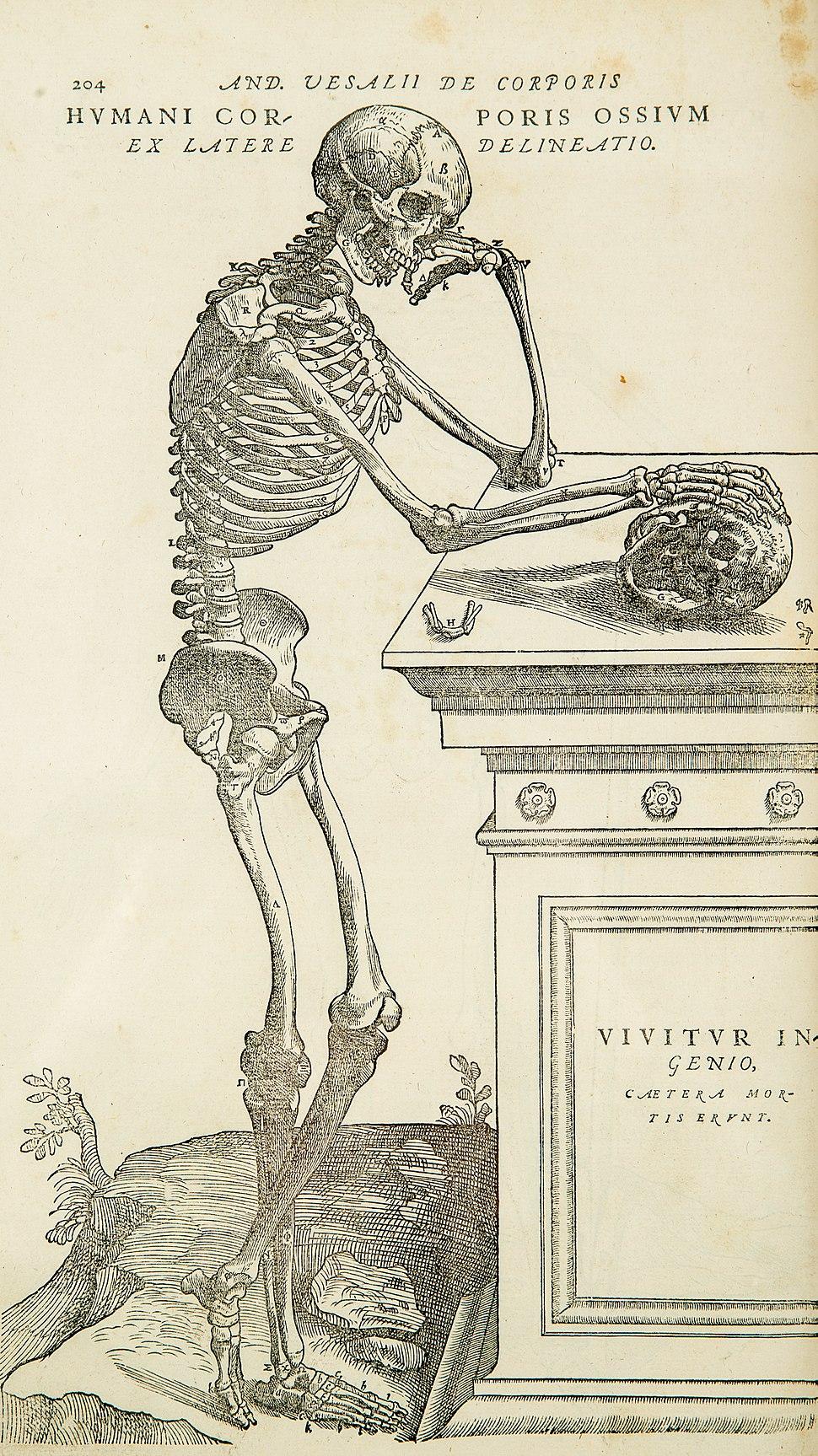 Vesalius-copy