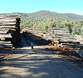 Victorian Central Highlands log dump 02 Pengo.jpg