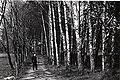 Vidkun Quisling i parkområdet rundt Gimle (Villa Grande). (8615478319).jpg