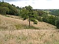 View from Buckland-tout-Saints Footpath 2 - geograph.org.uk - 227185.jpg