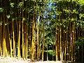 Villa Carlotta - Giardino dei Bambu.jpg