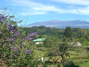 Waiākea-Uka - Cattle farm and local flowers grown in Waiakea-Uka (looking towards Mauna Kea)