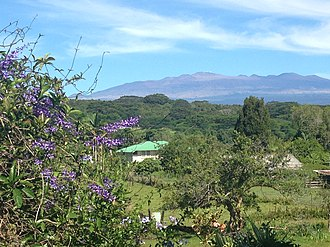 Waiākea-Uka - Cattle farm and local flowers grown in Waiakea-Uka (looking towards Mauna Kea)