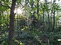Wald am Dahlemer See, Nr. 2.jpg