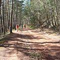 Waldweg - panoramio - Immanuel Giel (3).jpg