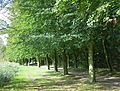 Wandelweg Verkallenbos Mol - panoramio.jpg