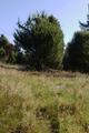 Wartenberg Landenhausen Trockenrasen Juniperus Ericales SCi 555520689 3.png