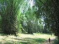 Wayanad-Bamboo.jpg