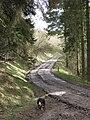 Wendover Woods - Half Way Down - or Half Way Up - geograph.org.uk - 1202299.jpg
