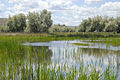 Wetland3 - Flickr - USDAgov.jpg
