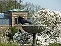 Wilhelma Bad Magnolienblüte.jpg