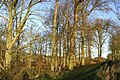 Winter Woodland - geograph.org.uk - 306353.jpg