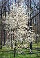 Wiosna w Świnach(Sudety, Pogórze Kaczawskie)(Aw58)P4190325.JPG