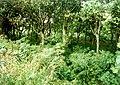 Woodland north of Carn Brea - geograph.org.uk - 2605.jpg