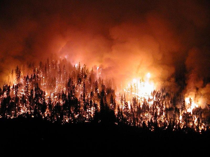 Orman Yangını Nedir? Orman Yangınlarının Sebepleri Nelerdir? Orman yangınlarından korunma yolları nelerdir?