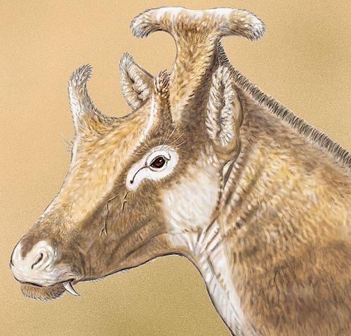 Xenokeryx