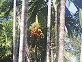 Yummy Fruits.jpg