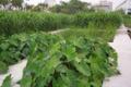 Zhongshan014.jpg