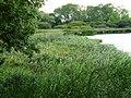 Zone humide - panoramio.jpg