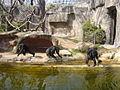 Zoo de Barcelona - micos.JPG