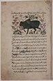 """""""A Bull"""", Folio from a Dispersed Nuzhatnama-i 'Ala'i of Shahmardan ibn Abi'l Khayr MET sf13-160-7r.jpg"""