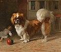 'Bo', a Pekingese Dog.jpg