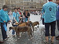 'Retired racing greyhounds' at Grand Place in Brussels..jpg