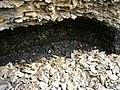 Ілірійський, копанки - біда степу і ПЗФ.jpg